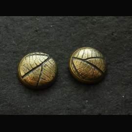 Corylus pontfüli